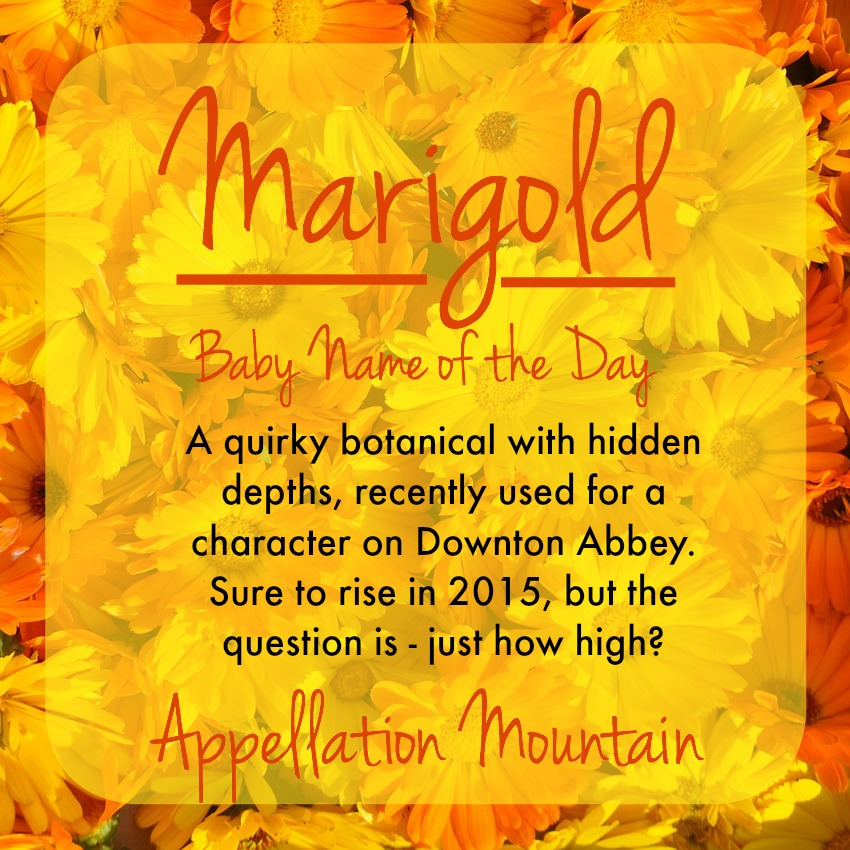 marigold flower meaning  flower, Natural flower