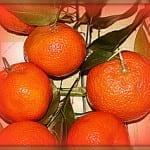 Rerun: Clementine
