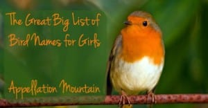 Bird Names for Girls
