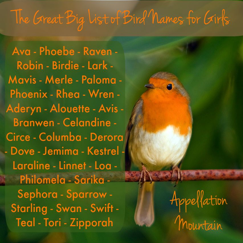 The Great Big List Of Bird Names For Girls Appellation Mountain