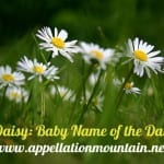 Daisy: Baby Name of the Day