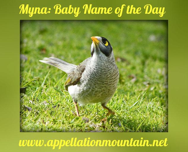 Myna name