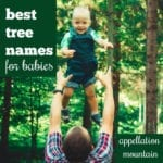 Arbor, Rowan, Acacia: Best Tree Names for Babies