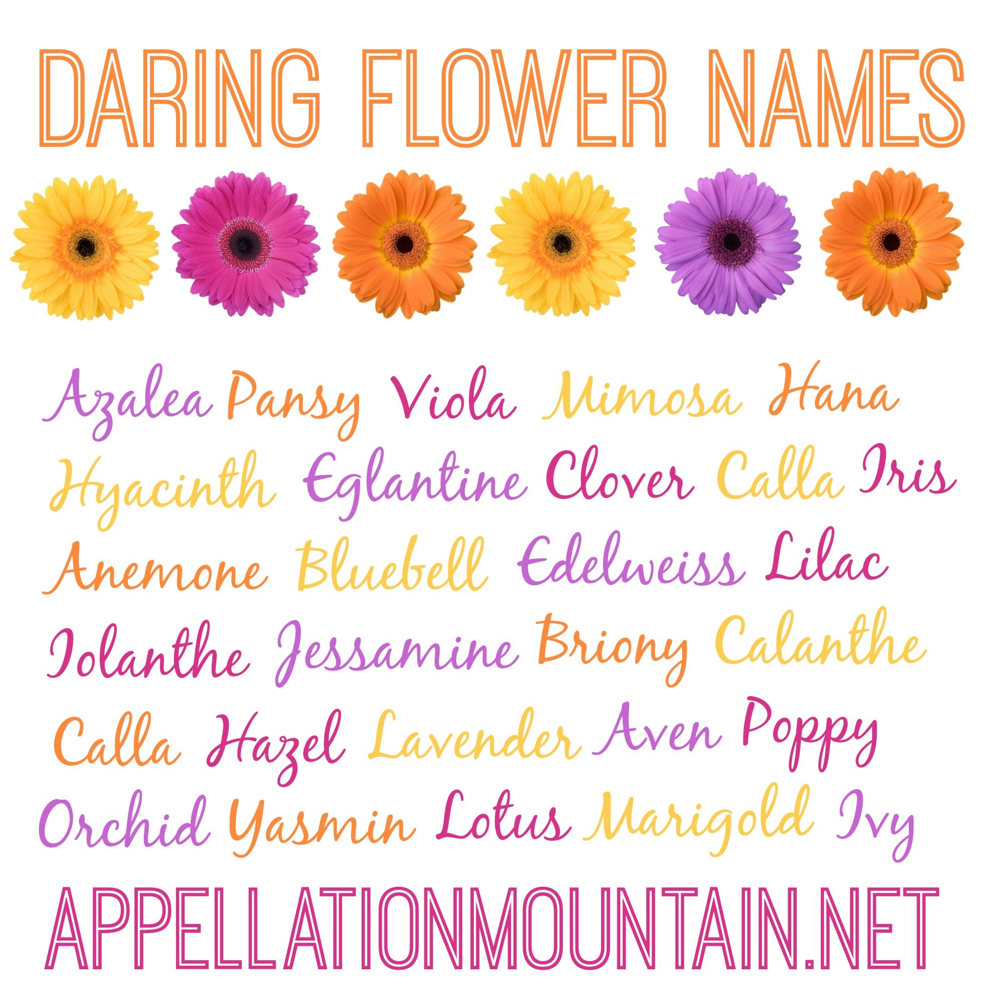 Azalea and Edelweiss: Daring Flower Names - Appellation Mountain