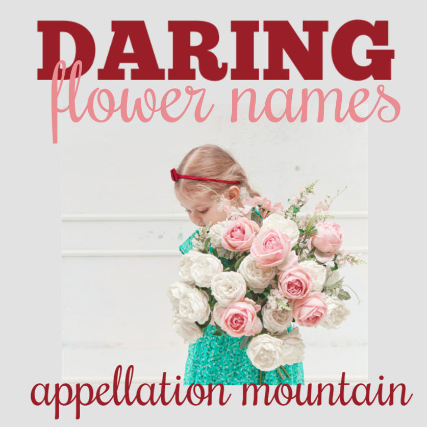 Azalea And Edelweiss Daring Flower Names Appellation Mountain
