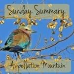 Sunday Summary