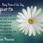Marguerite: Baby Name of the Day