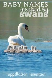 swan-inspired baby names