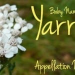 Yarrow: Baby Name of the Day