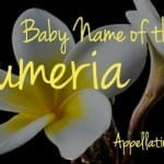 Plumeria: Baby Name of the Day