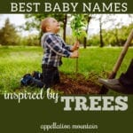 Best Tree Names for Babies: Arbor, Rowan, Acacia